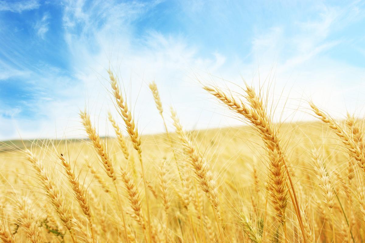 HP_Header_Wheat_5